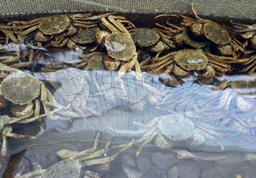 墨香园大闸蟹