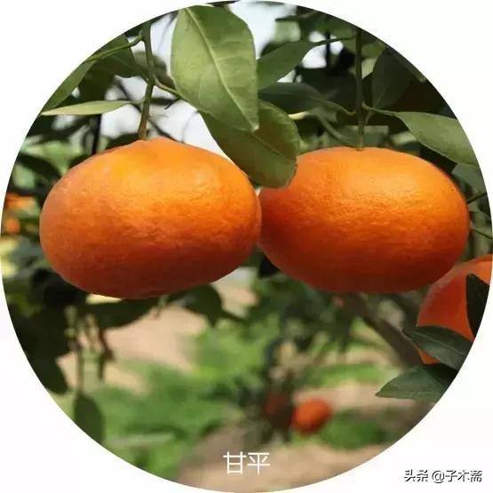 江安县湘橙电子商务有限公司