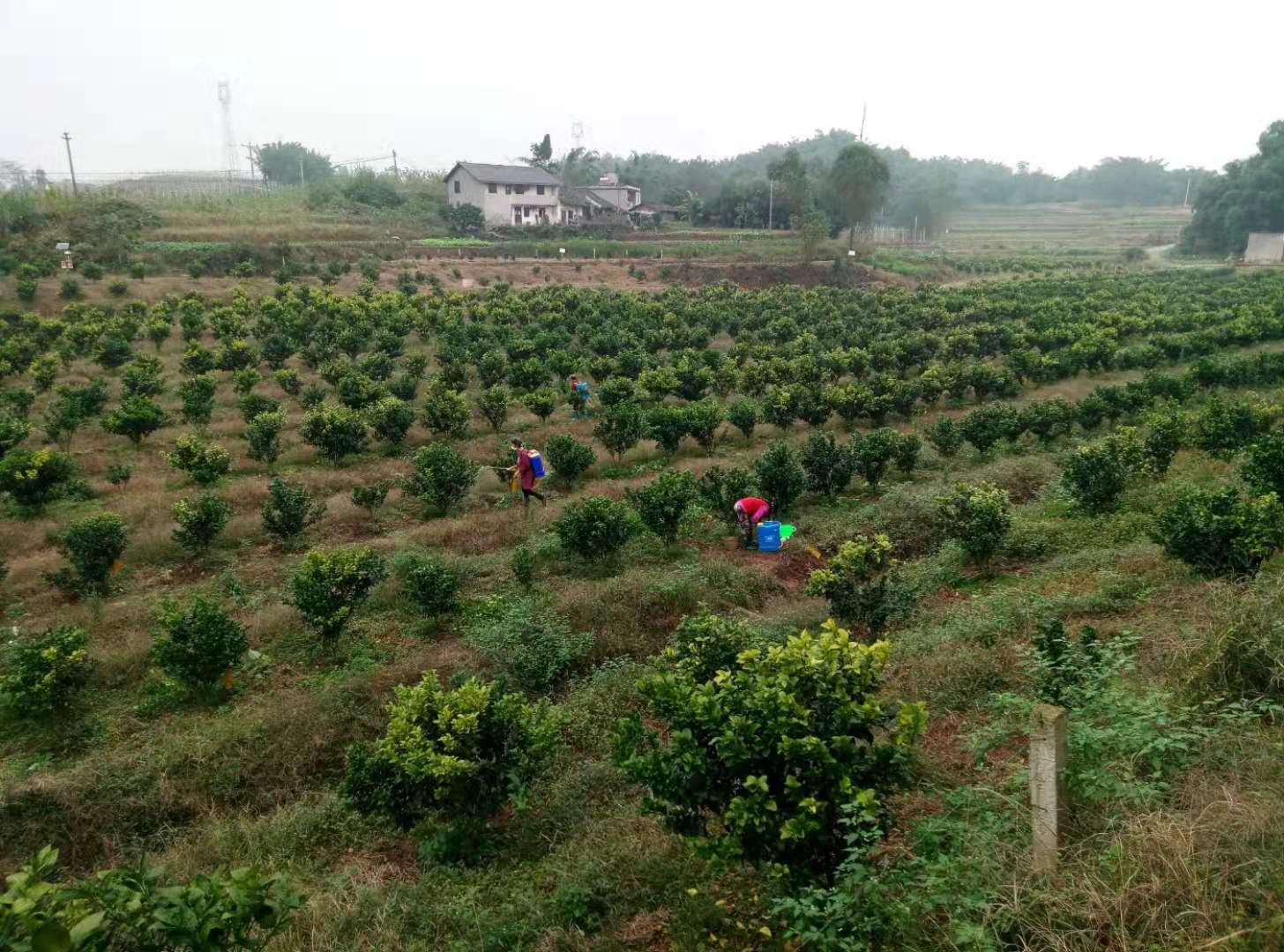 红丰水果专业合作社
