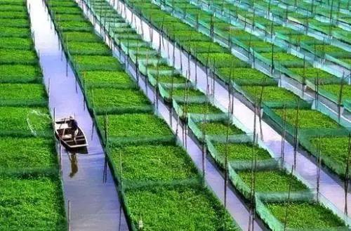 行业观察 | 农村特产业是什么样的产业?该如何发展?